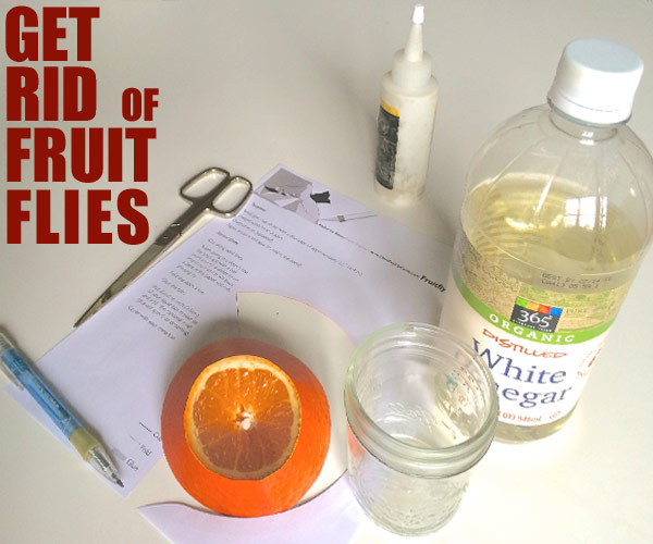 fruits how to make a fruit fly trap
