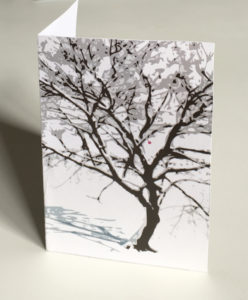 Cherry blossom on tree in winter